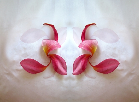 A composition of Jasmin Manga flower petals.